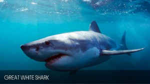 full_day_shark_diving_tour_02