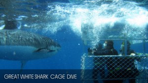 full_day_shark_diving_tour_03