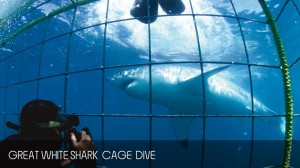 full_day_shark_diving_tour_05