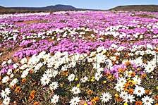 A Flower Filled Adventure In The Western Cape