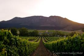 Cape Town Wine Route – Constantia Valley in The Heart of The City