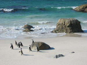 Discover Exotic Wildlife On A Cape Town Holiday