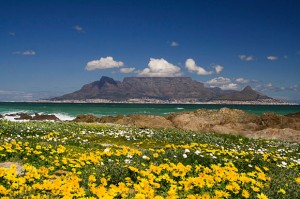 Planning a Spring Getaway in Cape Town?