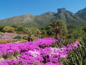 5 Signs That Spring in Cape Town Has Arrived