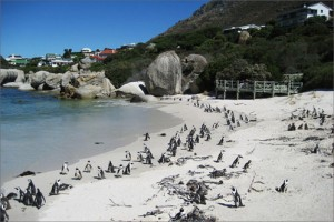Important Info about Cape Town Beaches