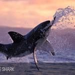 full_day_shark_diving_tour_01