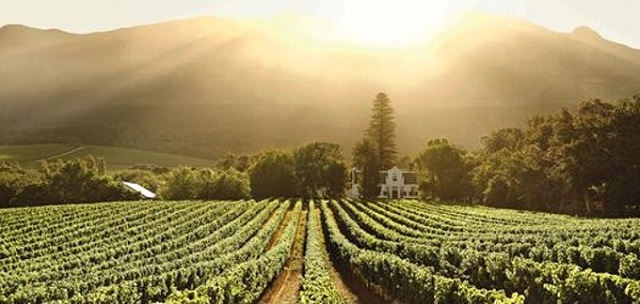 wine tasting tours in cape town