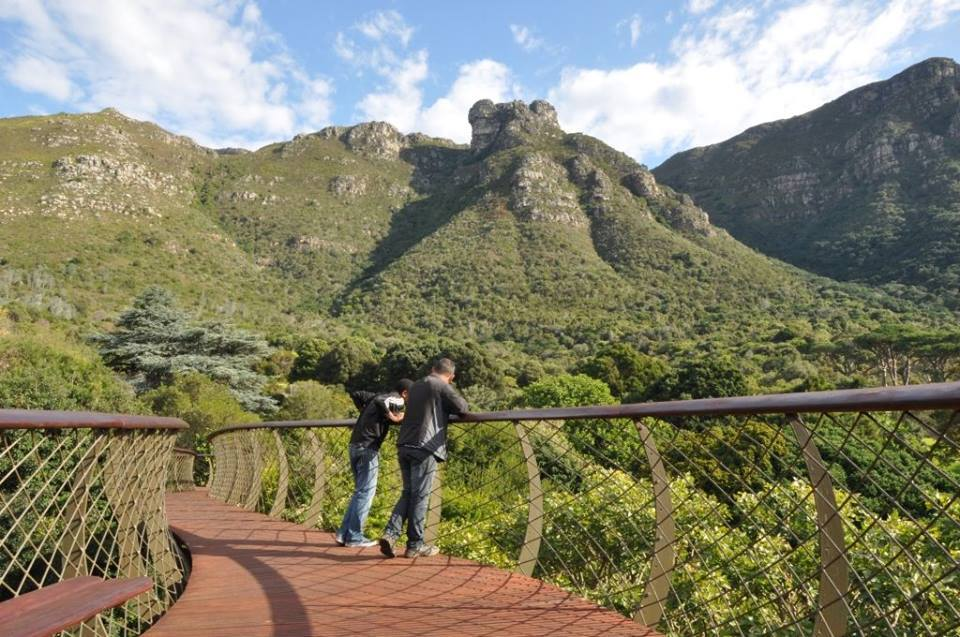 The Canopy Walkway at Kirstenbosch Gardens is finally finished!