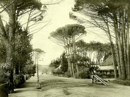 Blast from the past – Main Road in Wynberg circa 1903!