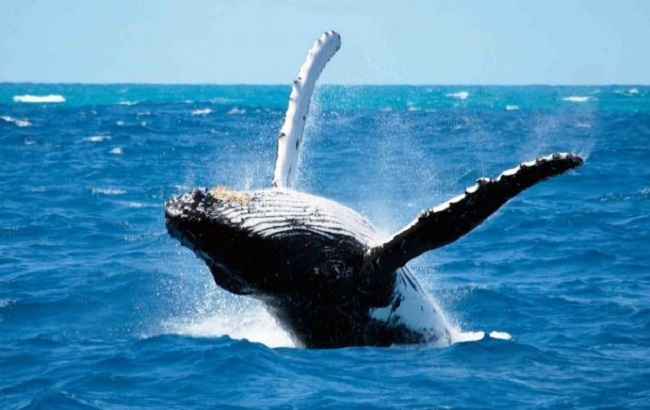 See Whales in Cape Town