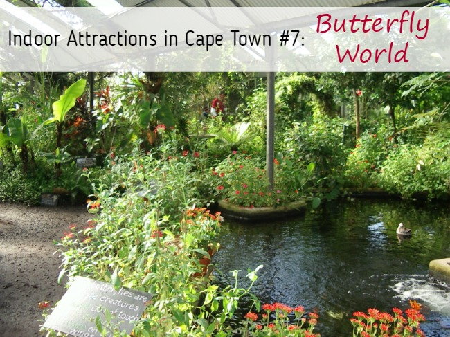 7 Indoor Attractions in Cape Town That Are Great for Rainy Days