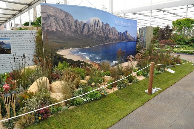 Gold Medal for Kirstenbosch at 2016 Chelsea Flower Show