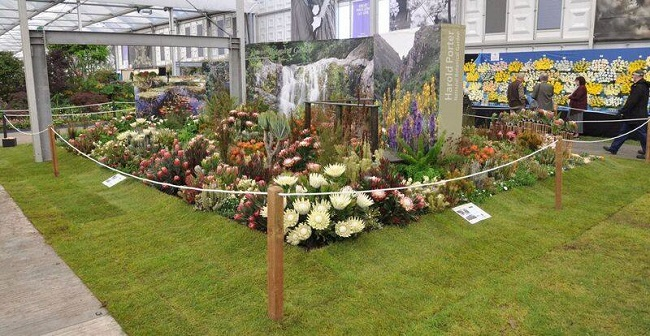 Kirstenbosch Gardens Takes Gold at Chelsea Flower Show 2016