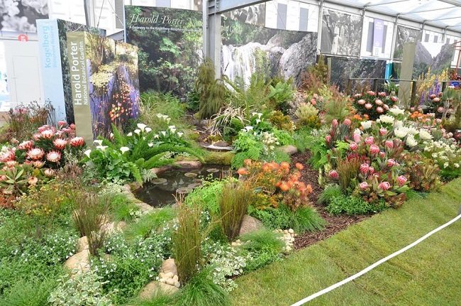 Kirstenbosch botanical gardens wins gold at chelsea flower - Chelsea flower show gold medals ...