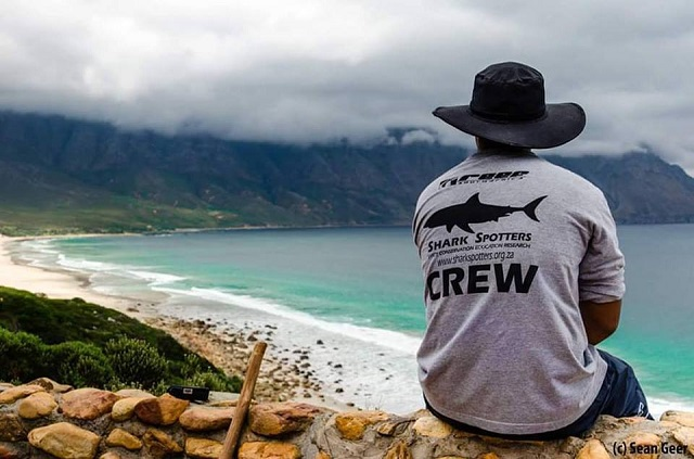 Why We Need the Shark Spotters Mobile App