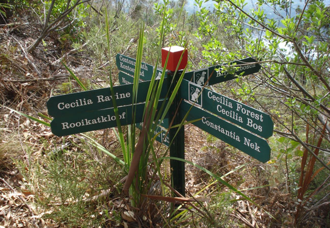 Top 10 Free Things to Do in Cape Town Cecilia Forest