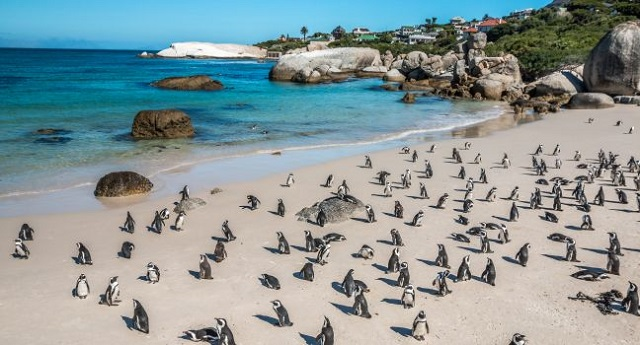 Top 10 Places to Propose in Cape Town Boulders Beach