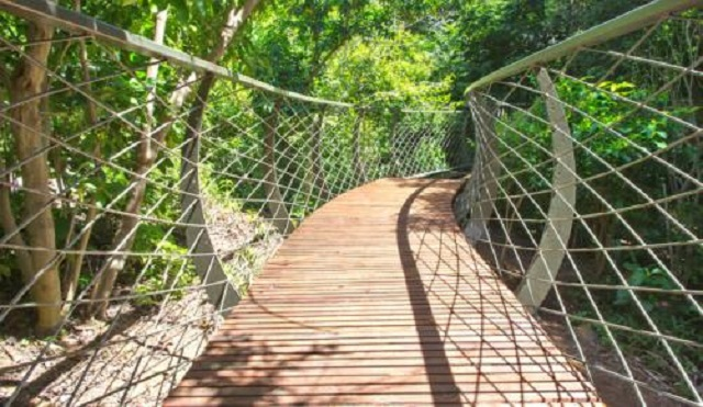 Top 10 Places to Propose in Cape Town Kirstenbosch Canopy Walkway