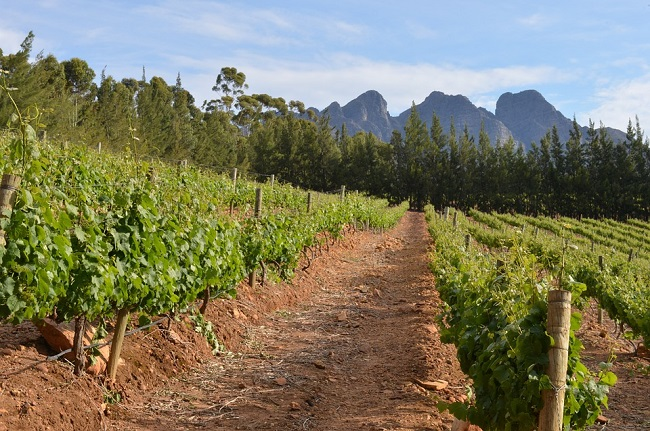 Top Ideas for a Mini Spring Road Trip in Cape Town