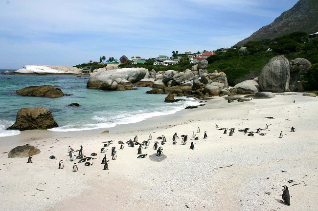 Boulders Beach in Cape Town