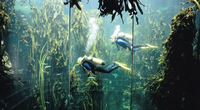 Two Oceans Aquarium Kelp Forest