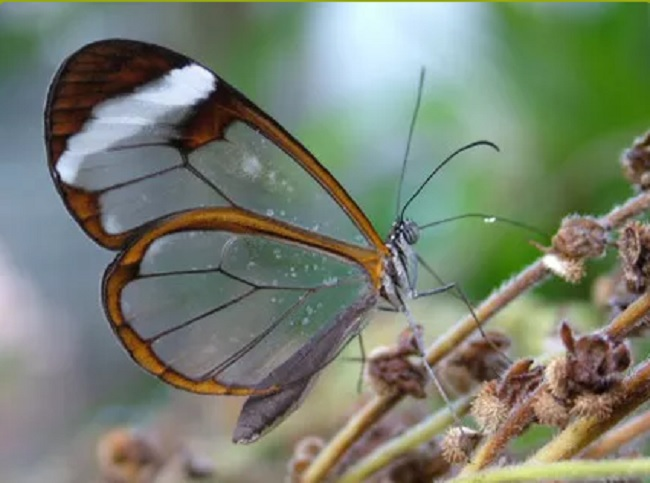 Why Visit Butterfly World Cape Town