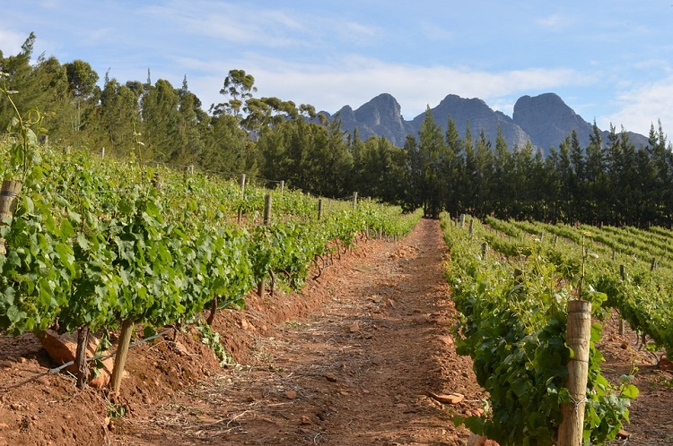 Top 10 Reasons to Visit Cape Town - Wine Farms