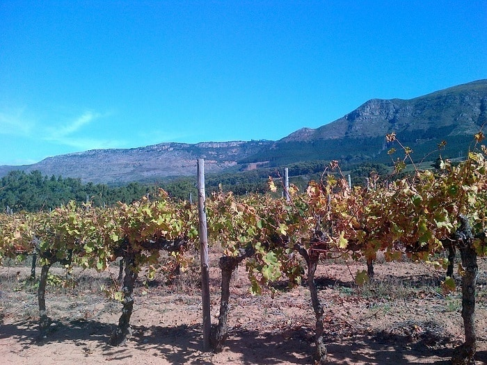 20 Free Things To Do in Cape Town - Wine Tasting