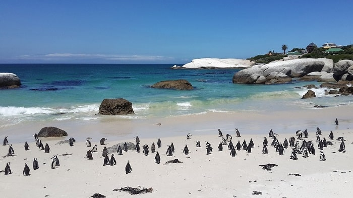 Beautiful Cape Town Beaches - Boulders Beach