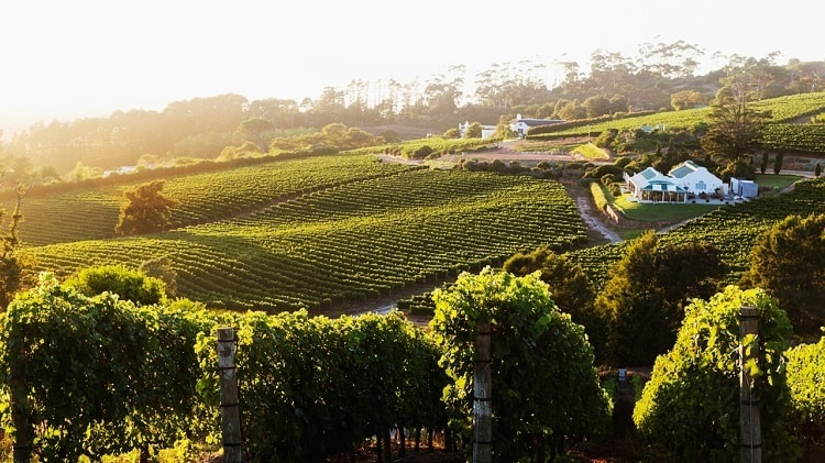 Klein Constantia - Attractions that define Cape Town