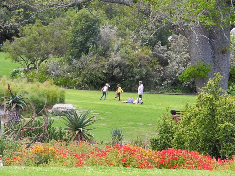 Kirstenbosch Botanical Gardens - attractions that define Cape Town