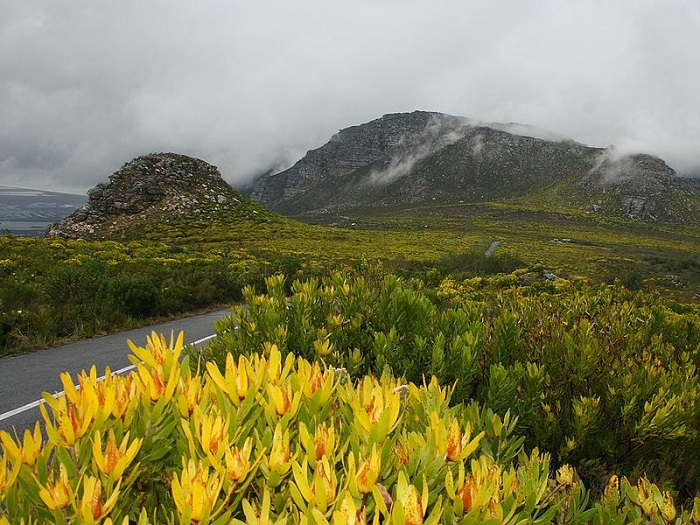 Wallet-Friendly Places To Visit in Cape Town - Silvermine Nature Reserve