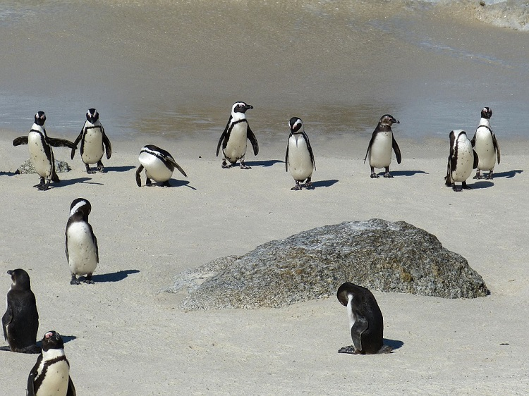 12 Fun Treats and Activities for Kids in Cape Town This Summer - Penguins