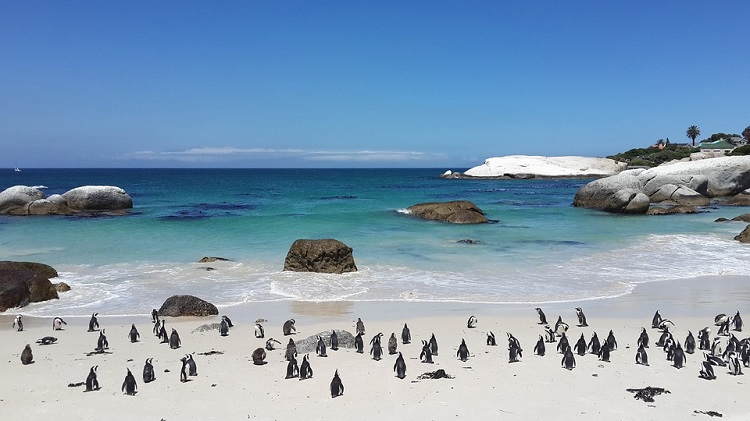 10 Most Romantic Places in Cape Town - Boulders Beach