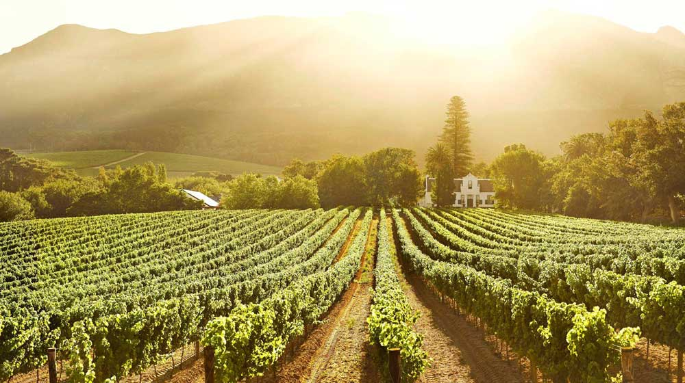 wine regions in the Western Cape