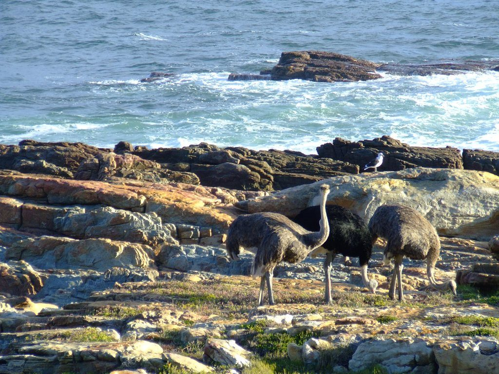 wildlife experiences in Cape Town