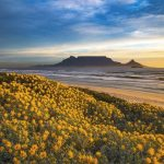 Why Spring is the Best Time to Visit Cape Town