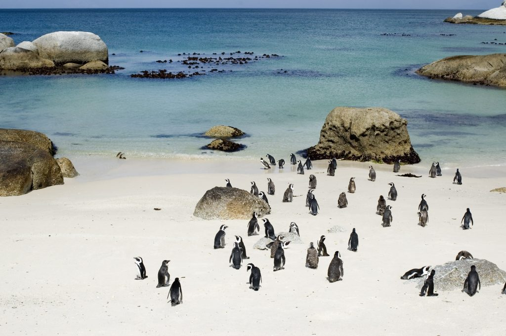 Cape Town trips