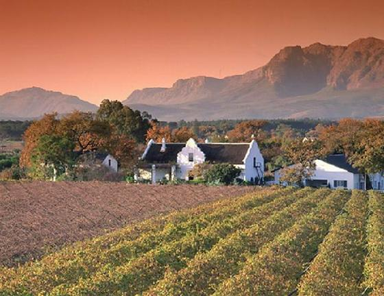 Cape Town stellenbosch wine route